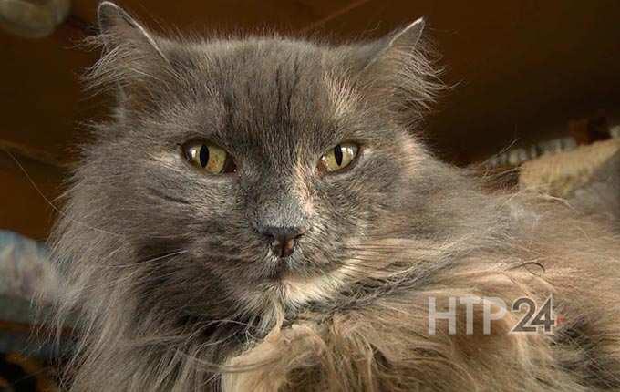Стало известно, кто чипирует кошек в Нижнекамске
