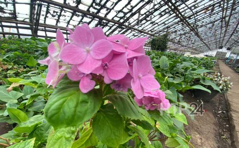 теплица нижнекамск цветы